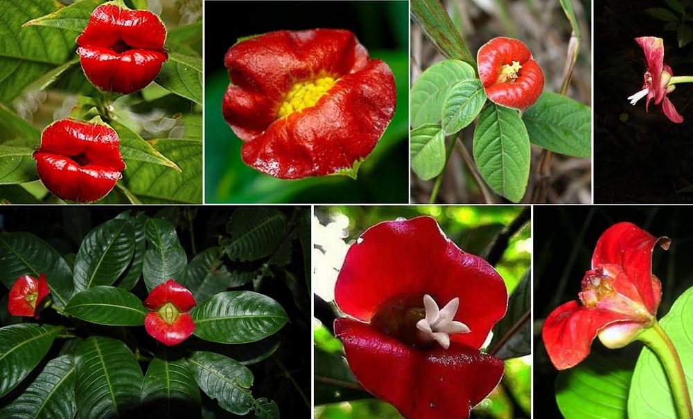 fleur bouche rouge