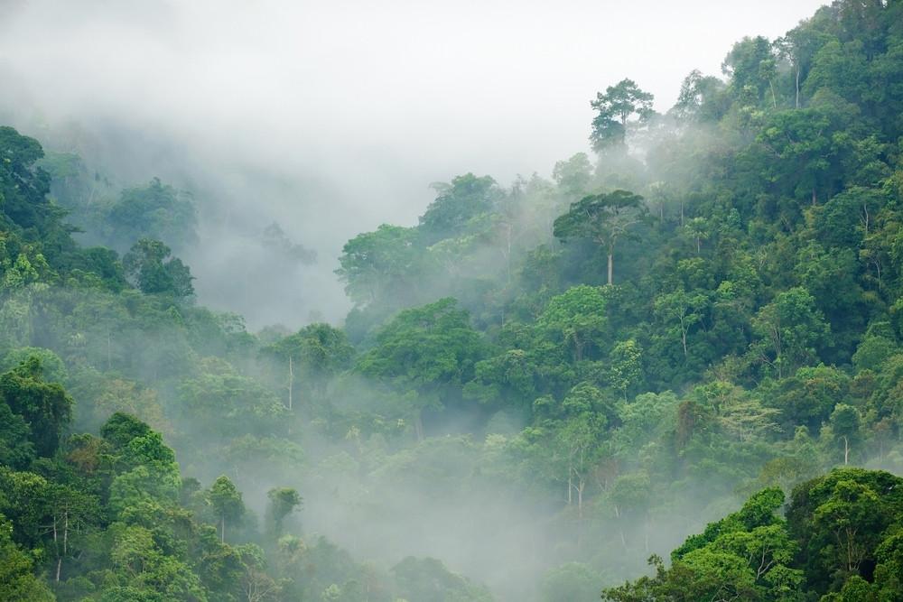 Foret de nuages Costa Rica