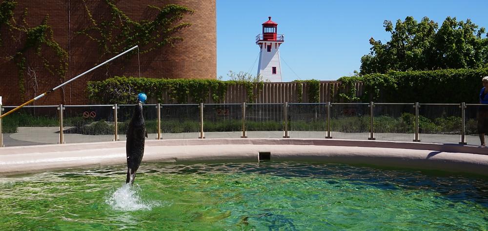 Aquarium et Centre marin du Nouveau-Brunswick