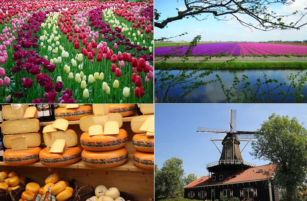 tulipes Alkmaar dans le Noord Holland