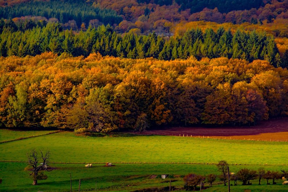 Parc naturel du Morvan en France