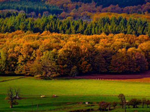 Le Parc naturel du Morvan en France