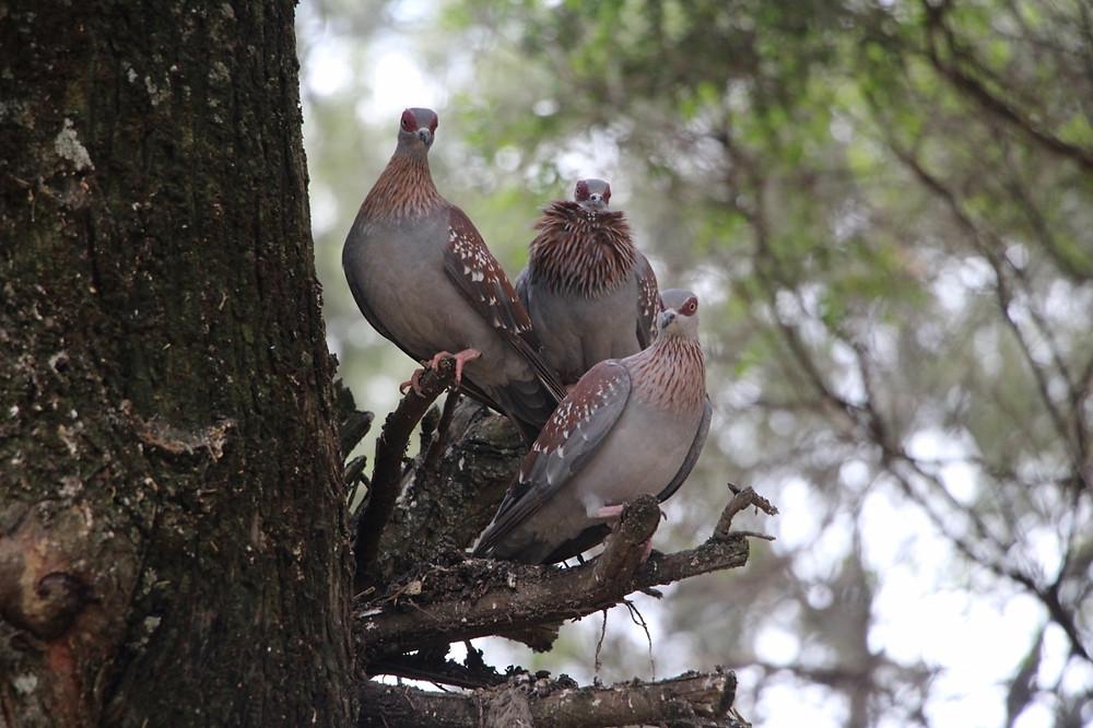 Gondar oiseaux