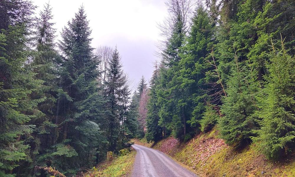 road trip foret noire
