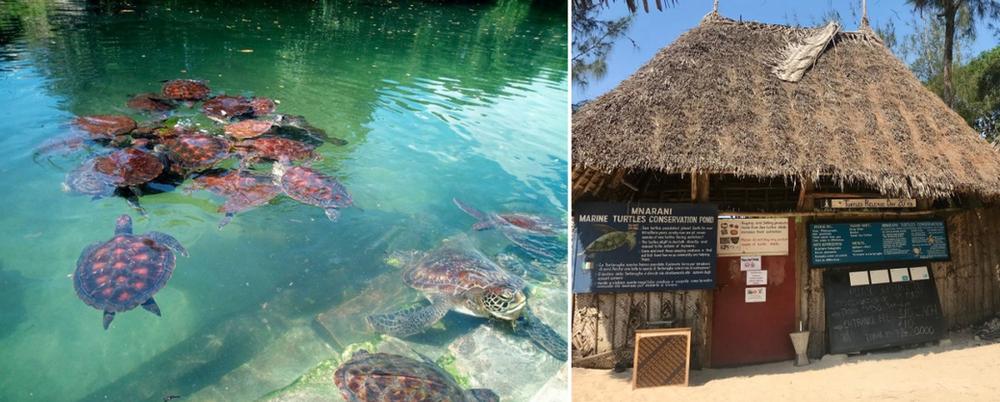 Mnarani Turtle Conservation Pond