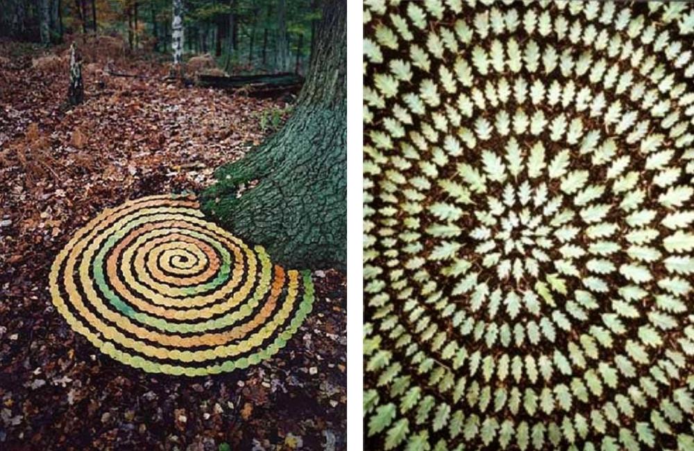 Tim Pugh feuilles d'automne en ordre art