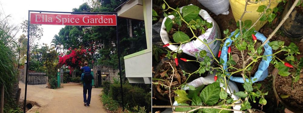 spice garden Ella au Sri Lanka