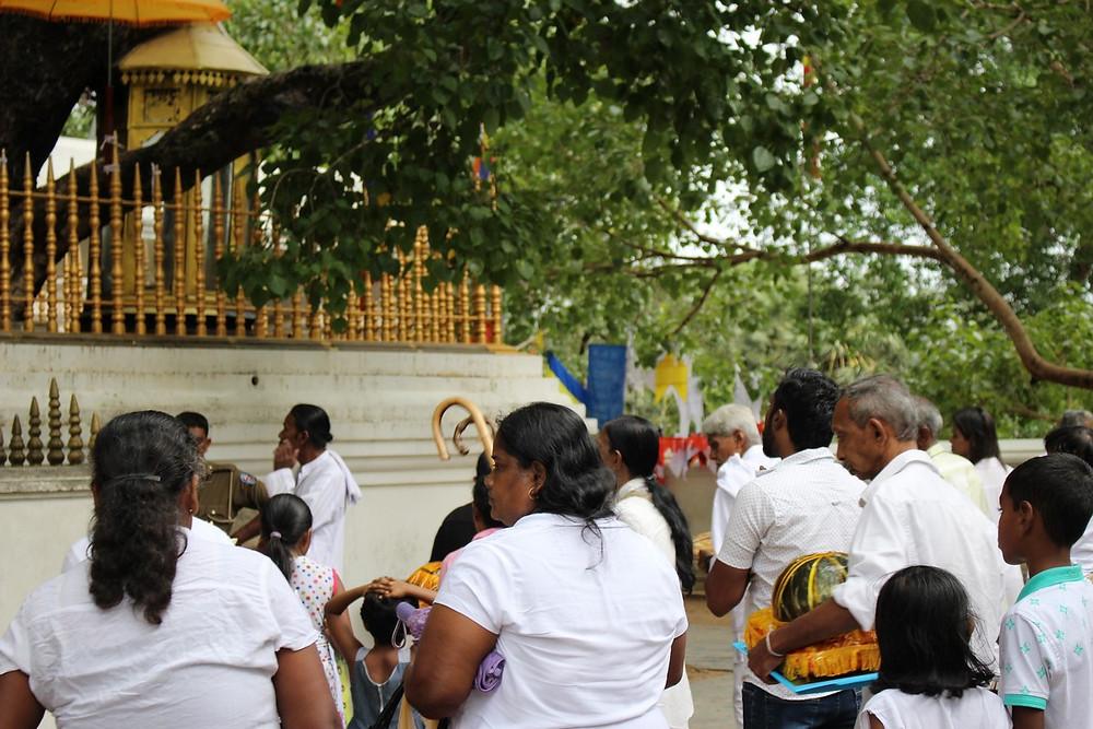 sri maha boddhi Anuradhapura