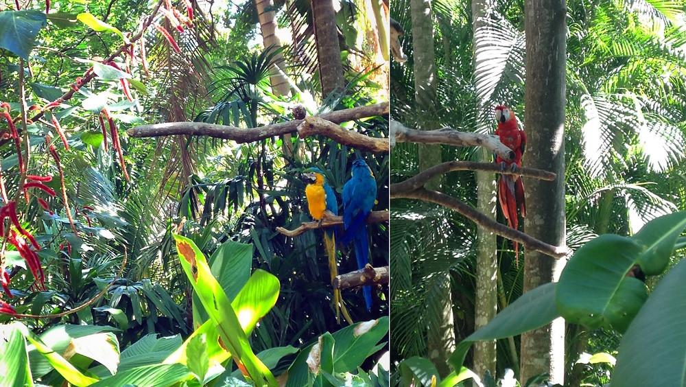 zoo AVE Alajuela au Costa Rica