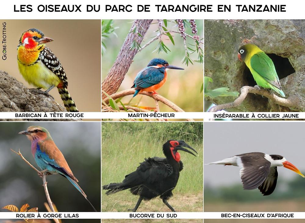 oiseaux parc tarangire