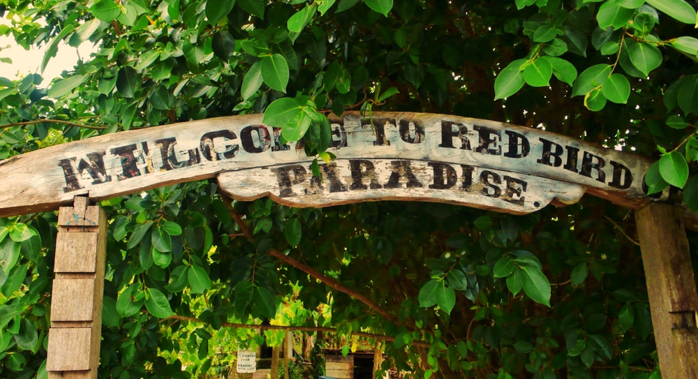 Red Bird paradise ile raja ampat