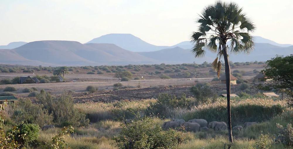 Palmwag namibie