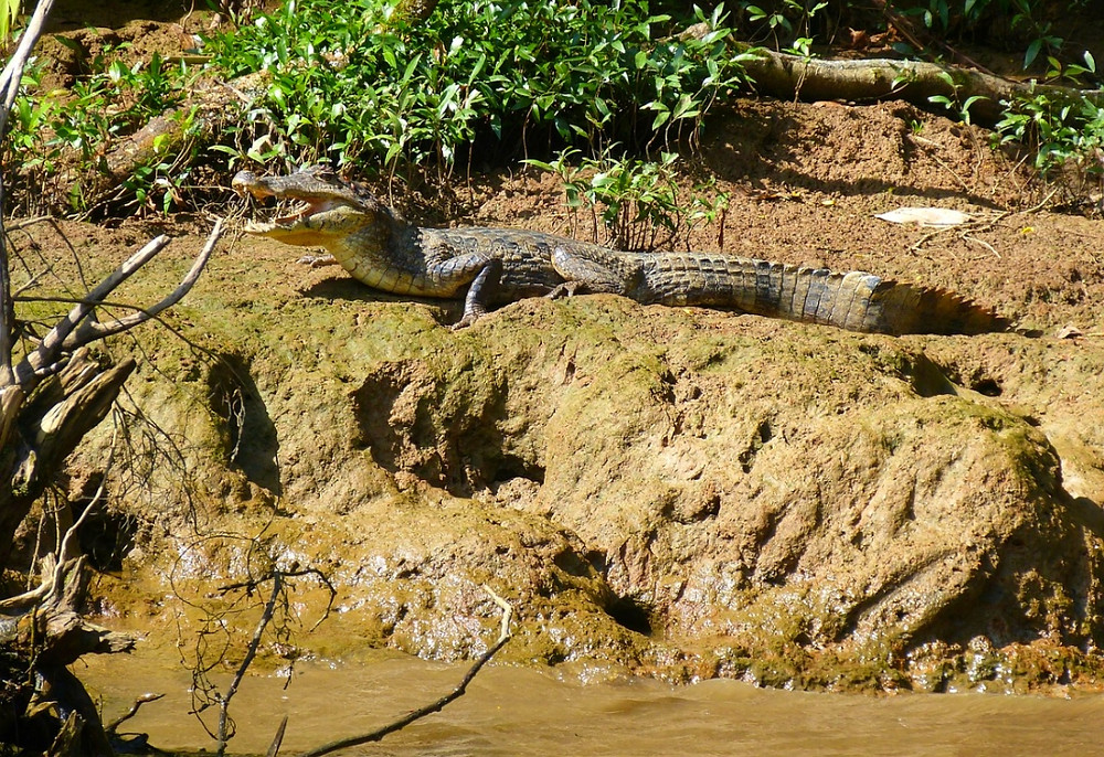rio grande tarcoles crocodiles