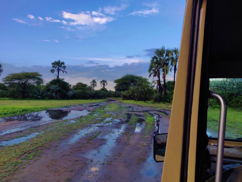 safari tarangire parc