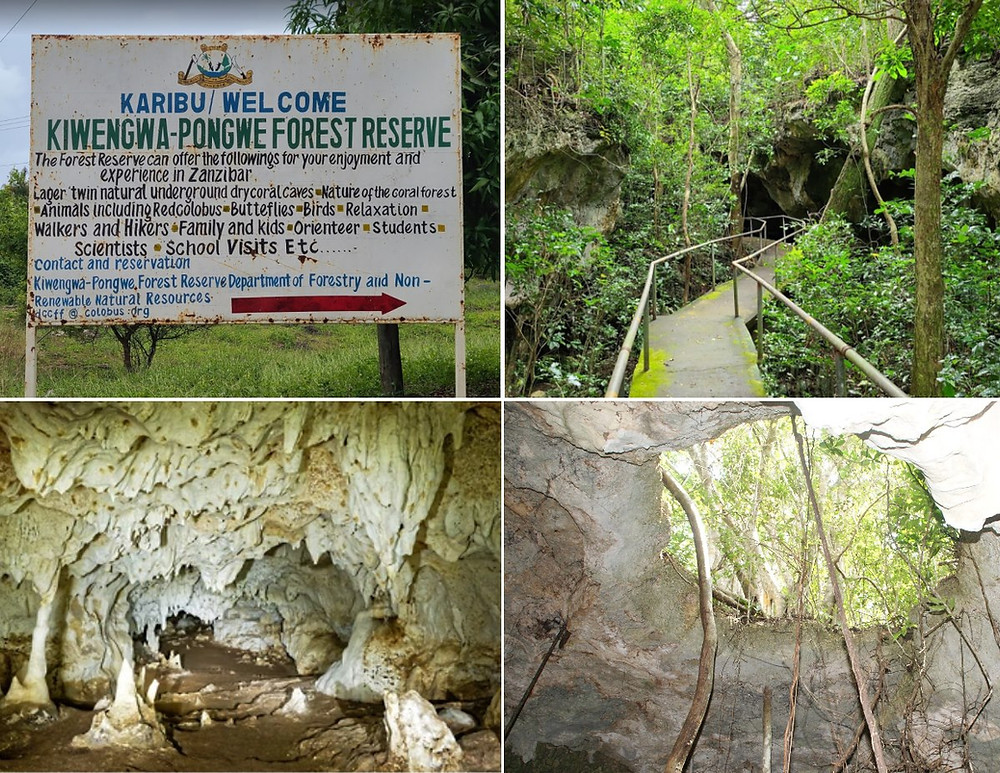 Kiwengwa Pongwe Forest