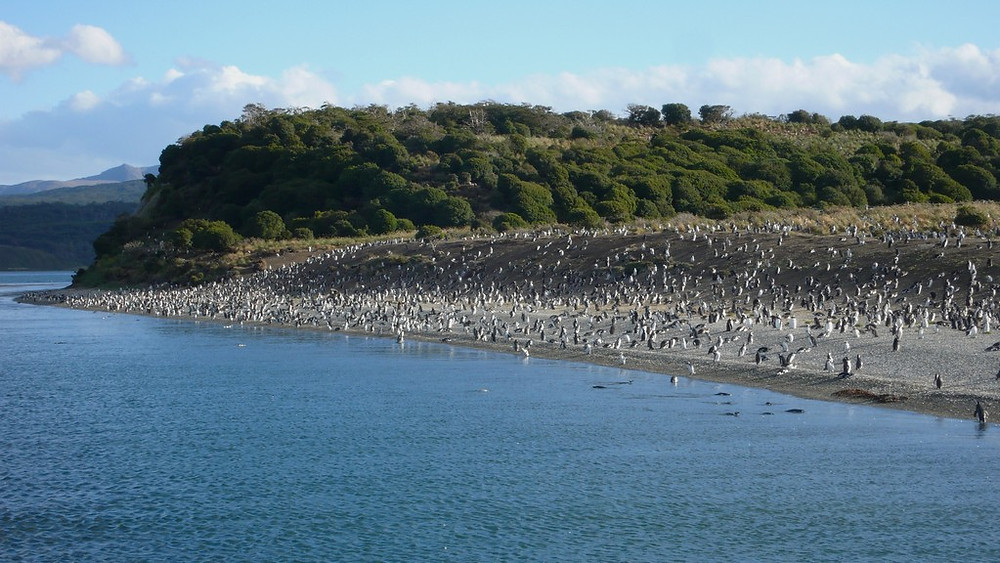 pinguinera Ushuaïa