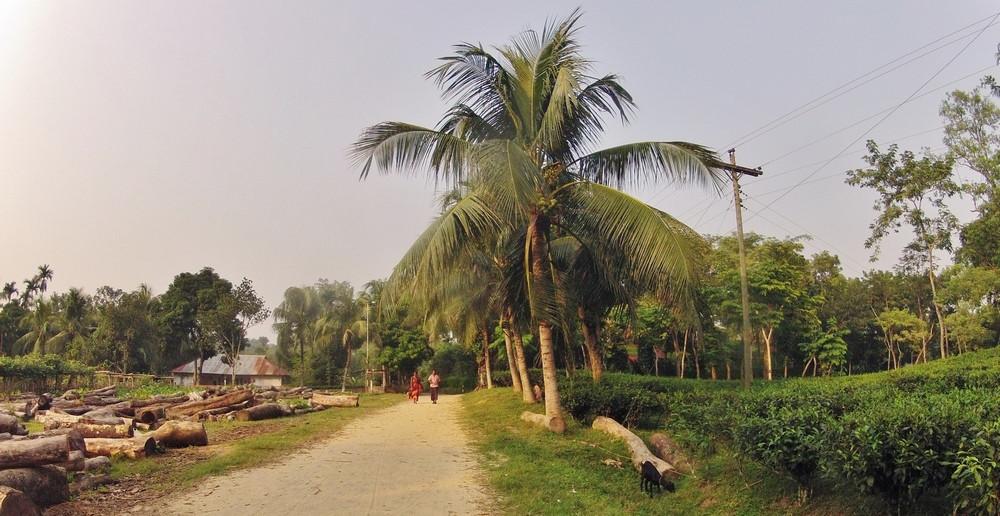 village srimangal bangladesh