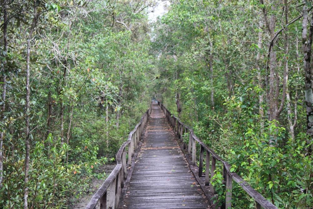 Pont Sundarbans voyage Bangladesh
