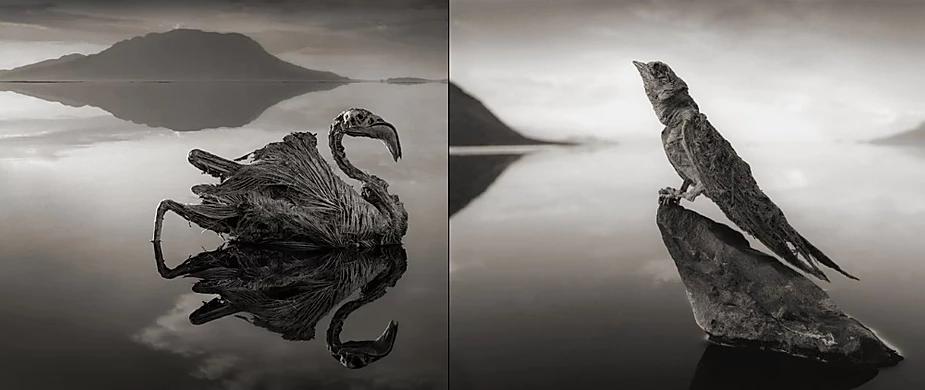 lac natron animaux petrifiés