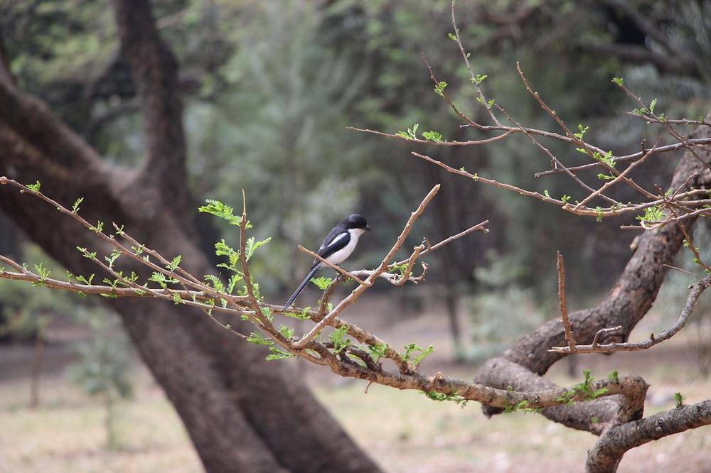 Gondar nature