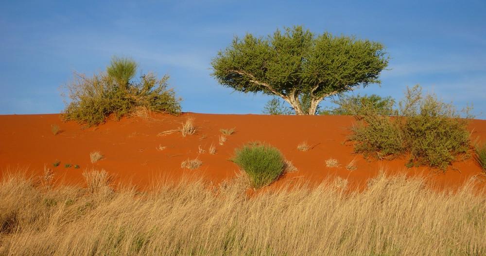 Désert du Kalahari, Mariental en Nambie