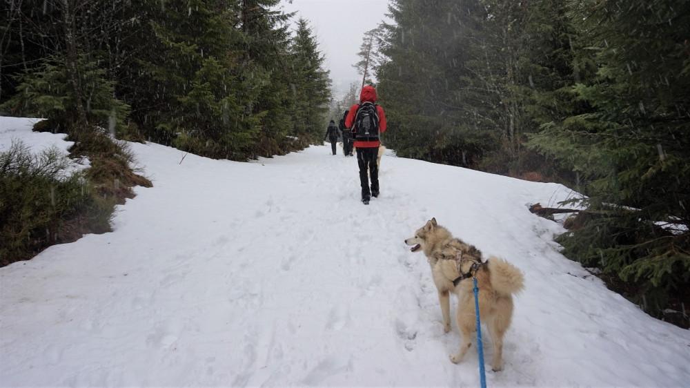 Cani rando dans le massif des vosges