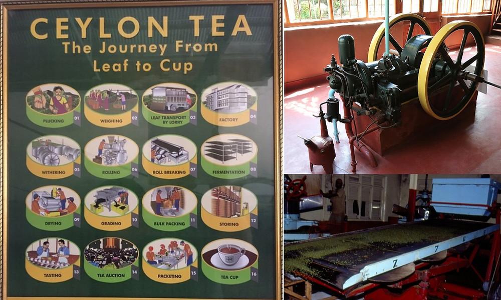 musée du thé kandy