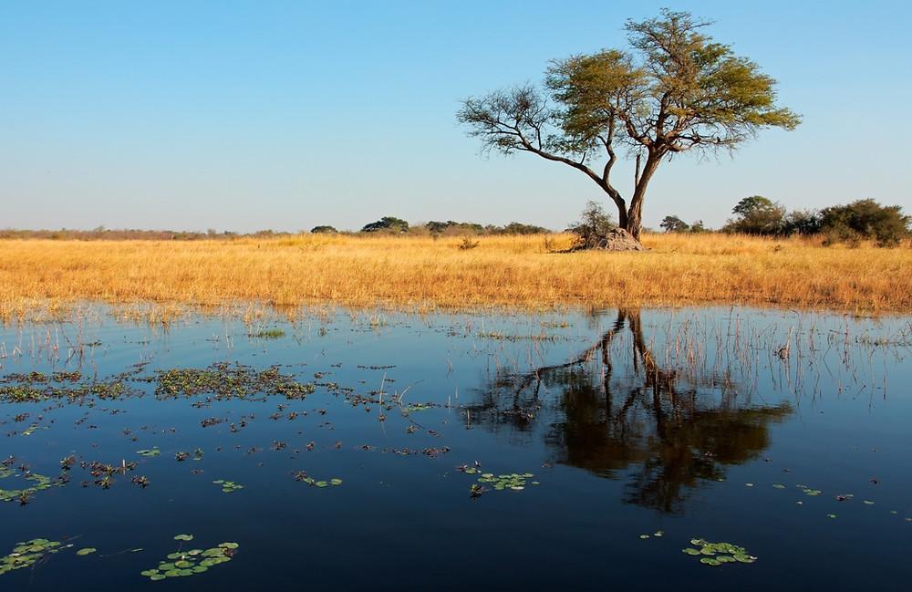 road trip namibie boswana afrique du sud
