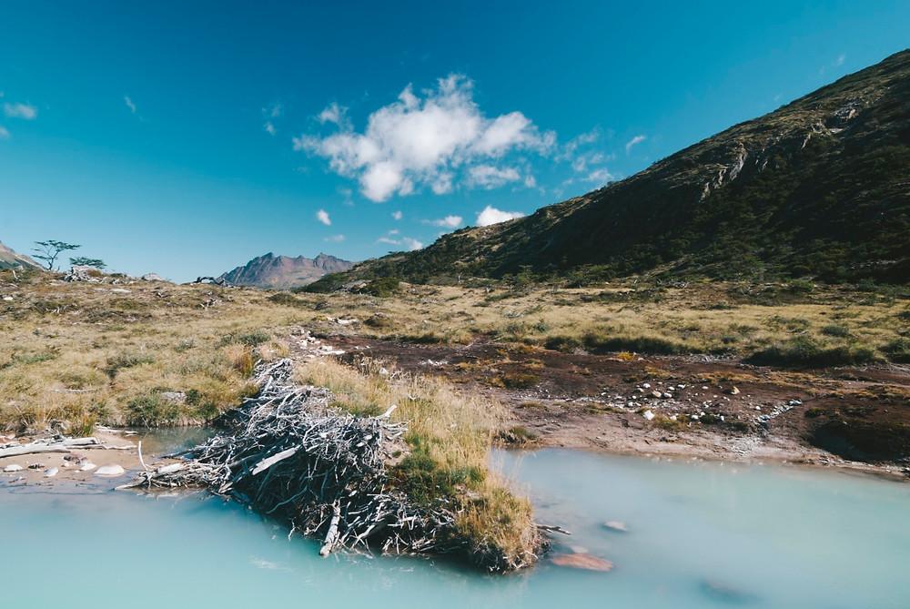 Laguna Esmeralda castors