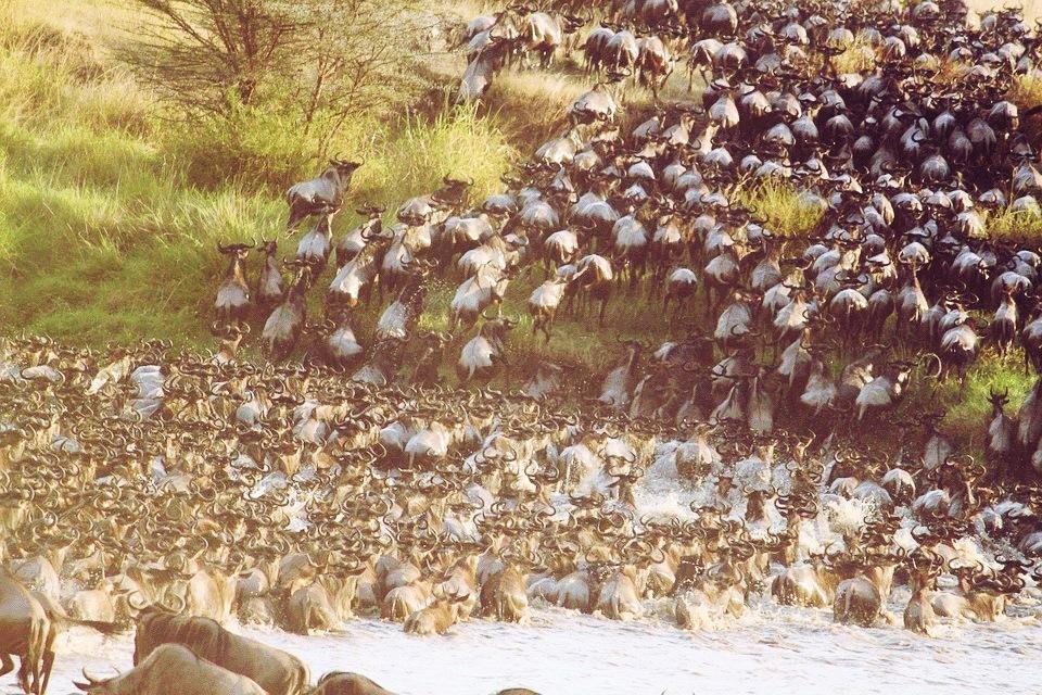 migrations rivière mara serengeti