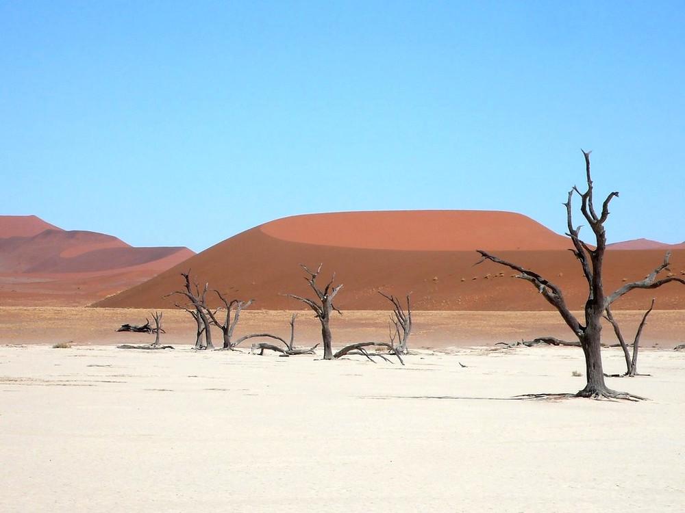 dunes et arbres Dead Vlei