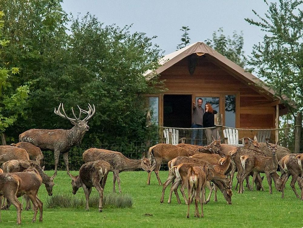 Parc animalier de Sainte-Croix (Moselle)