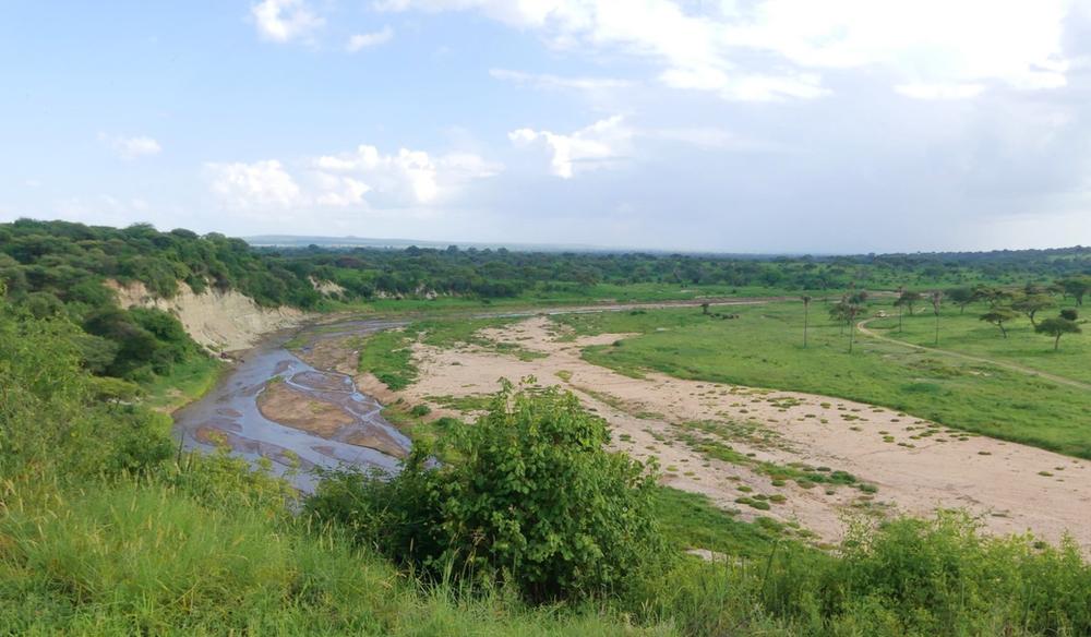 fleuve tarangire tanzanie