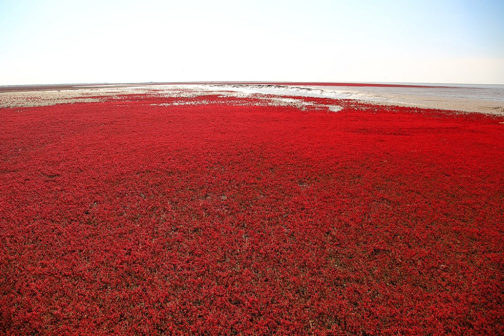 red beach panjin china