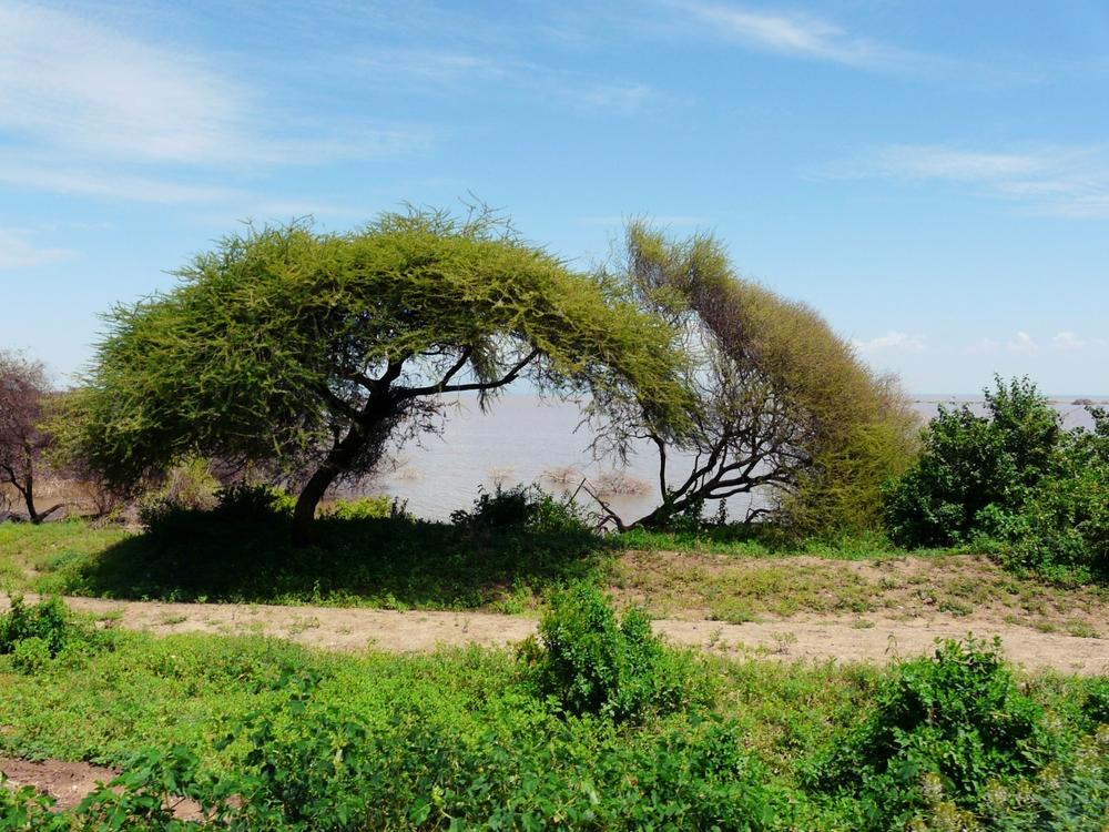 Paysage parc lac manyara