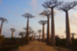 Madagascar voyage 9.jpg