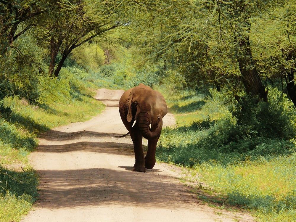 elephants parc manyara