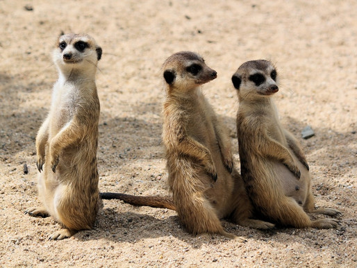 De Rundu à Grootfontein, Namibie