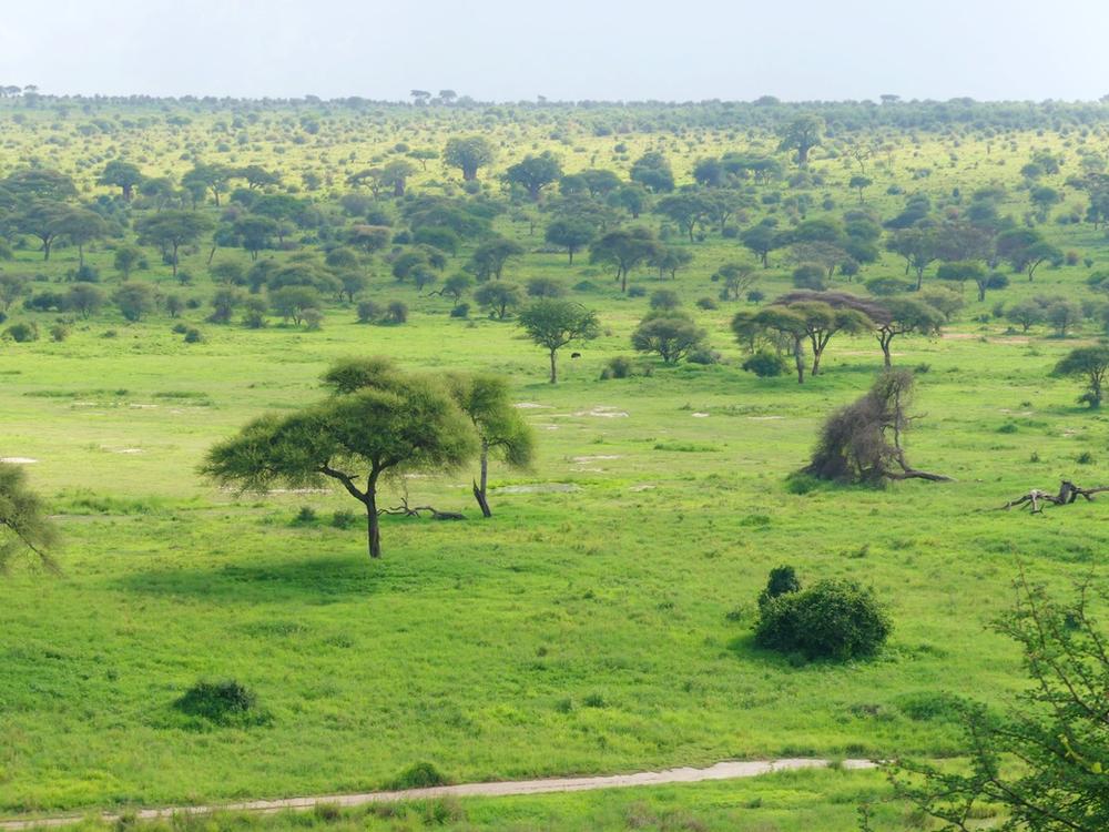 paysage parc tarangire