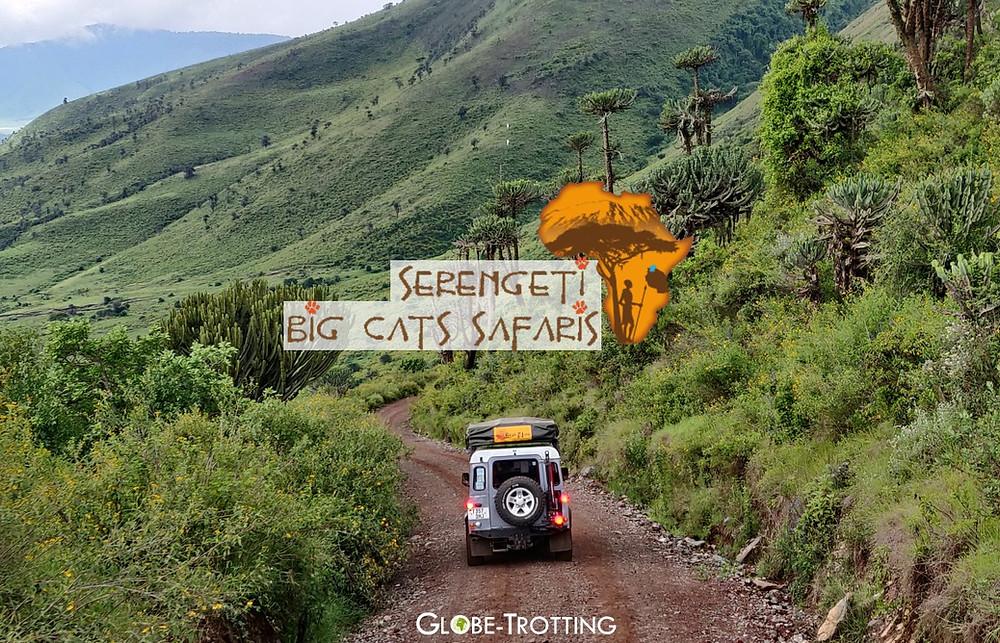 agence Serengeti Big Cats