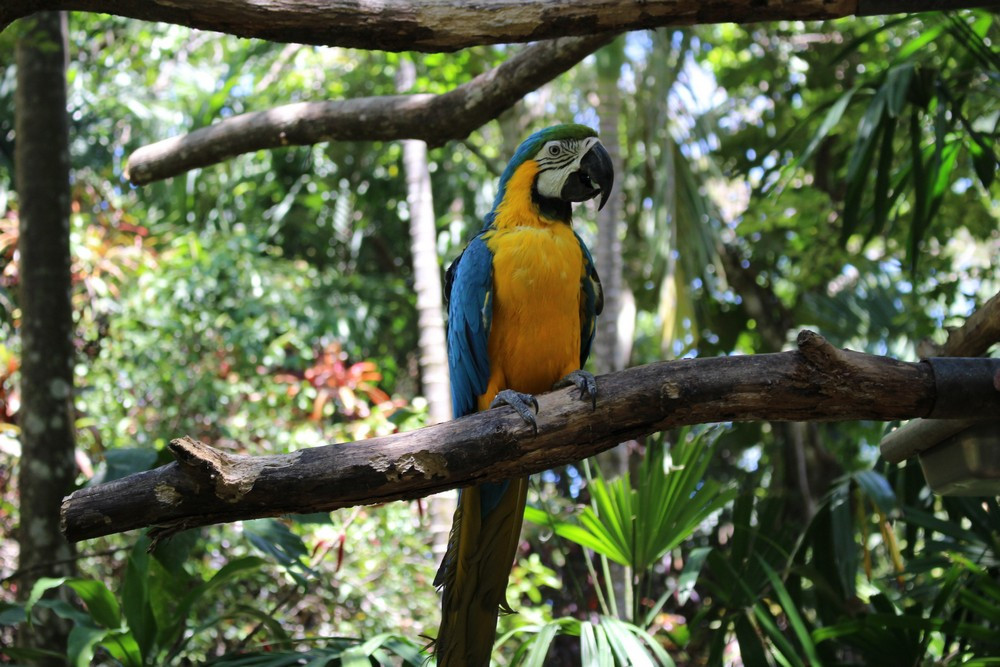 voyage Alajuela au Costa Rica