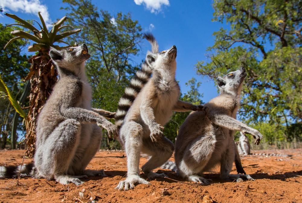 Trek Madagascar