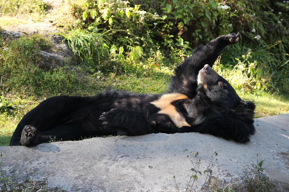 Zoo de Darjeeling