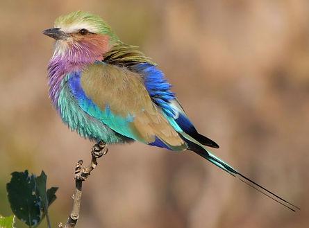 kongola namibie caprivi.jpg