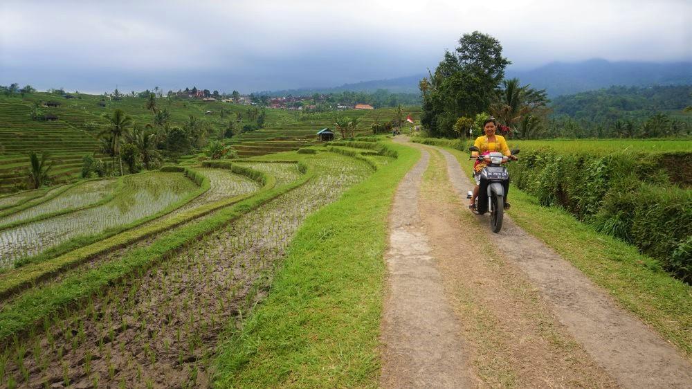 scooter Jatiluwih à Bali