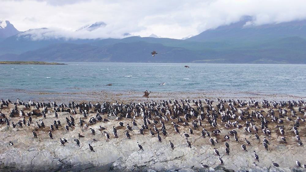 Canal Beagle Ile des oiseaux