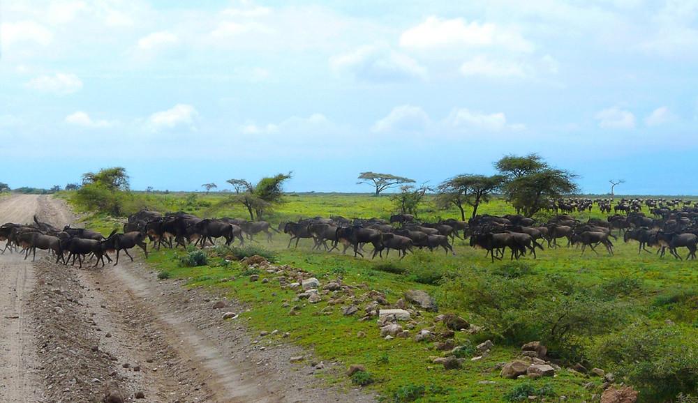 Parc Serengeti Tanzanie