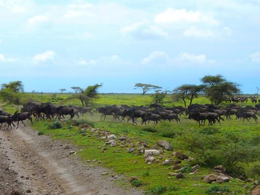 Le parc du Serengeti en Tanzanie