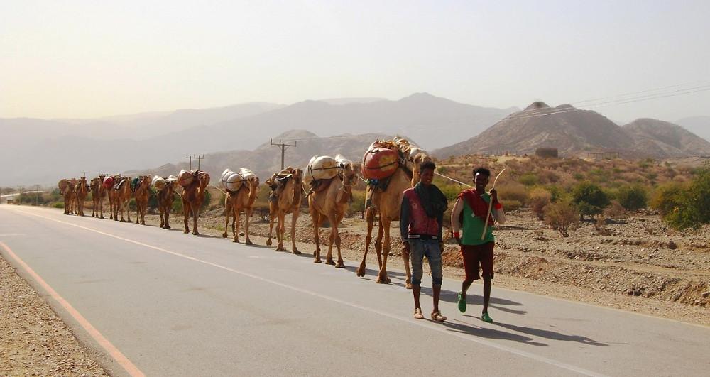 caravane dromadaires ethiopie