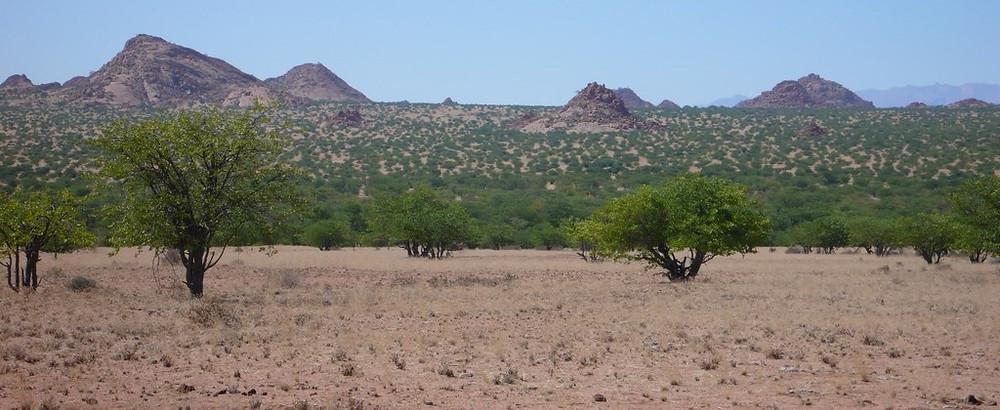 Cape cross namibie savane